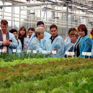 Салатный клуб во Владимере 2013