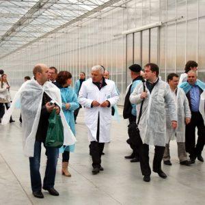 Состояние и перспективы развития овощеводства защищённого грунта в РФ