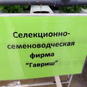 """Коллекция зеленных культур и салата на семинаре """"Салатного клуба"""" (2014)"""