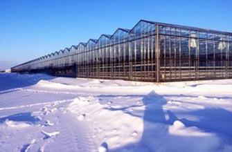 Продажа современного тепличного комплекса в Кемеровской области