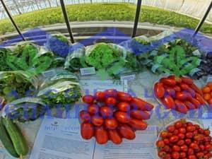 Семинар по развитию рынка отечественной овощной продукции