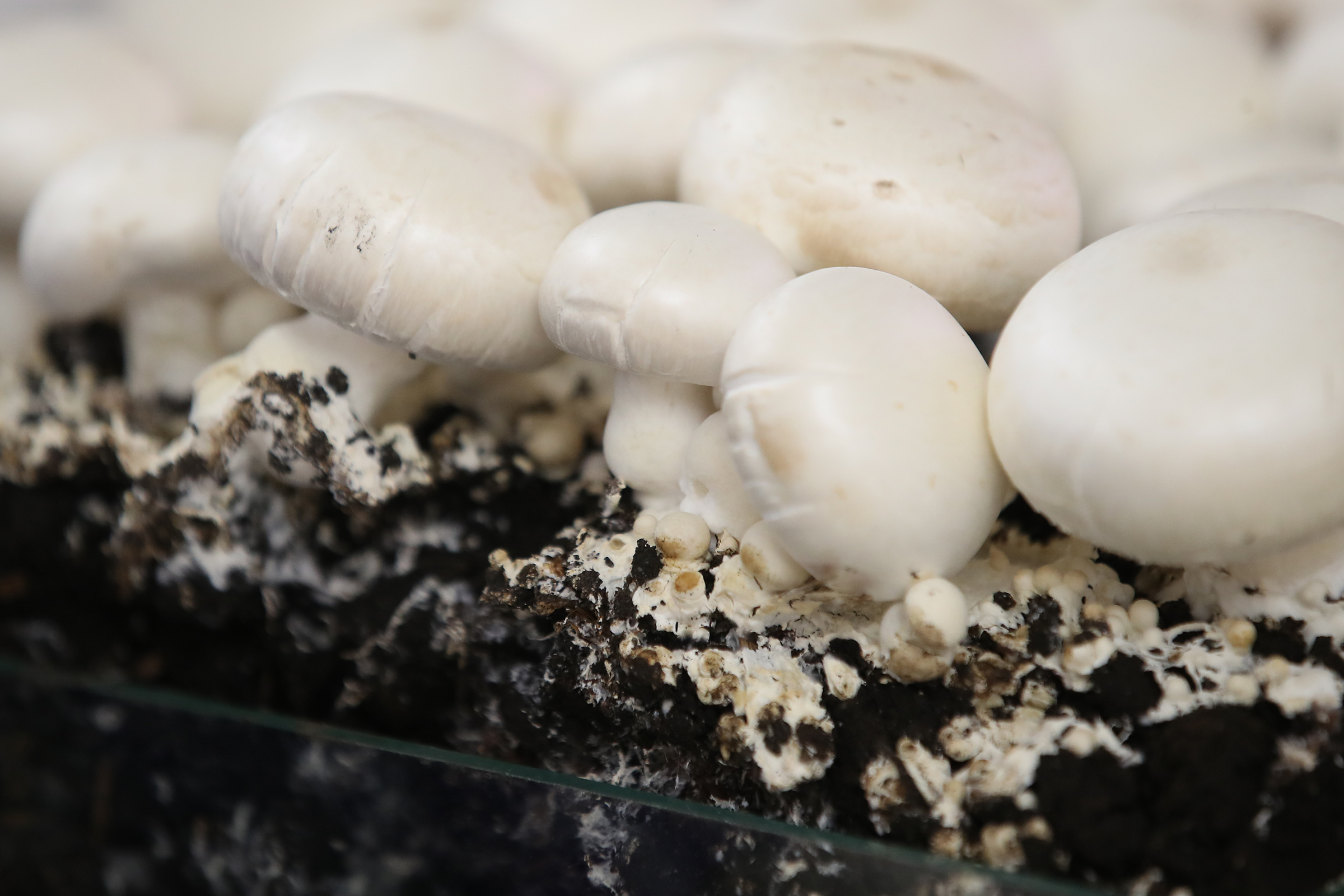 Первая Всероссийская грибная конференция
