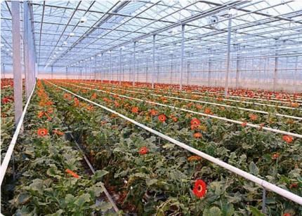 Начало процедуры реализации актива ТК «Розовый сад»