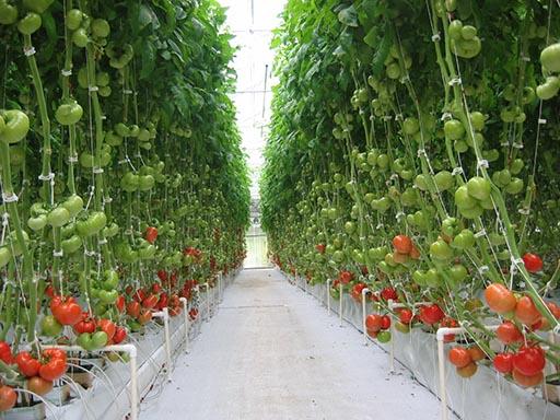 Соглашение  по развитию овощеводства, грибоводства и цветоводства