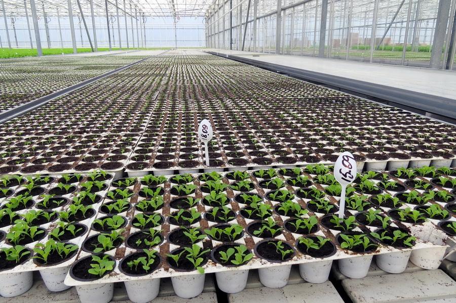 Современные технологии выращивания овощных и цветочных культур в защищенном грунте