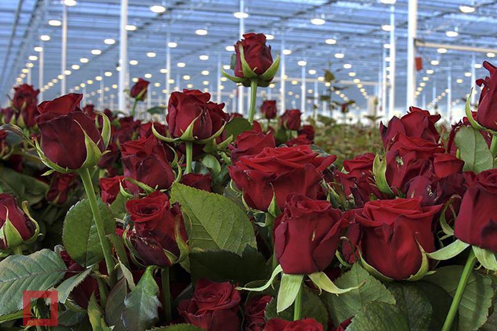 Семинар  для  агрономов цветоводческих предприятий 2019