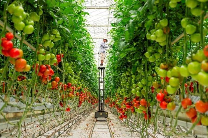 Данные по валовому сбору овощей защищенного грунта на 02.06.2020