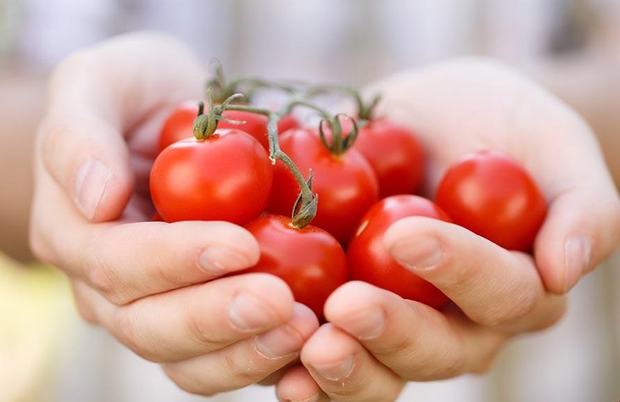 Отчет о раздаче овощей