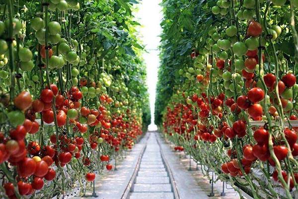Валовый сбор овощей на 28.10.2020