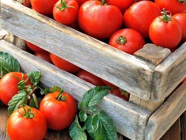 Липецкая область сохраняет лидерство по сбору овощей закрытого грунта