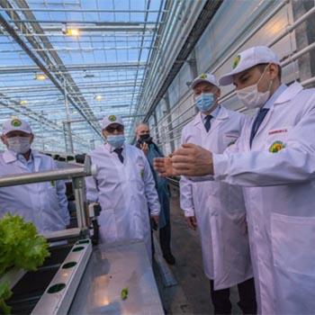 Под Новосибирском открыли новый тепличный комплекс по выращиванию салатов