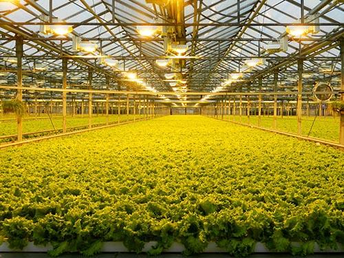 Овощи защищенного грунта будут отнесены к приоритетным направлениям агропромышленного комплекса
